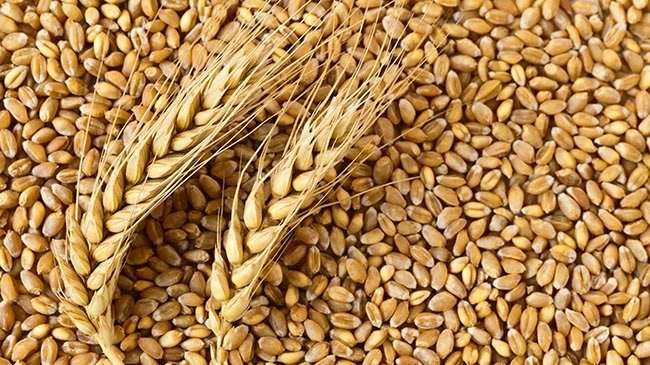 How Hydrolyzed Wheat Protein Stops Natural Hair Breakage